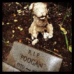 poogan